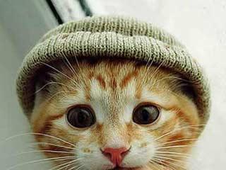Vorschaubild Lustige Katzen Bilder 1
