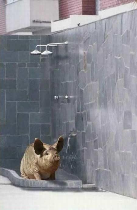 duschen bilder lustig