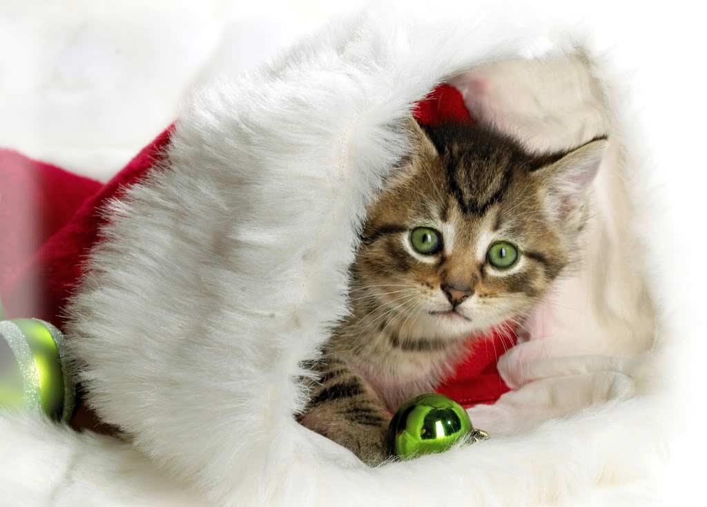 Bildergebnis für Lustige Weihnachtsbilder Tiere