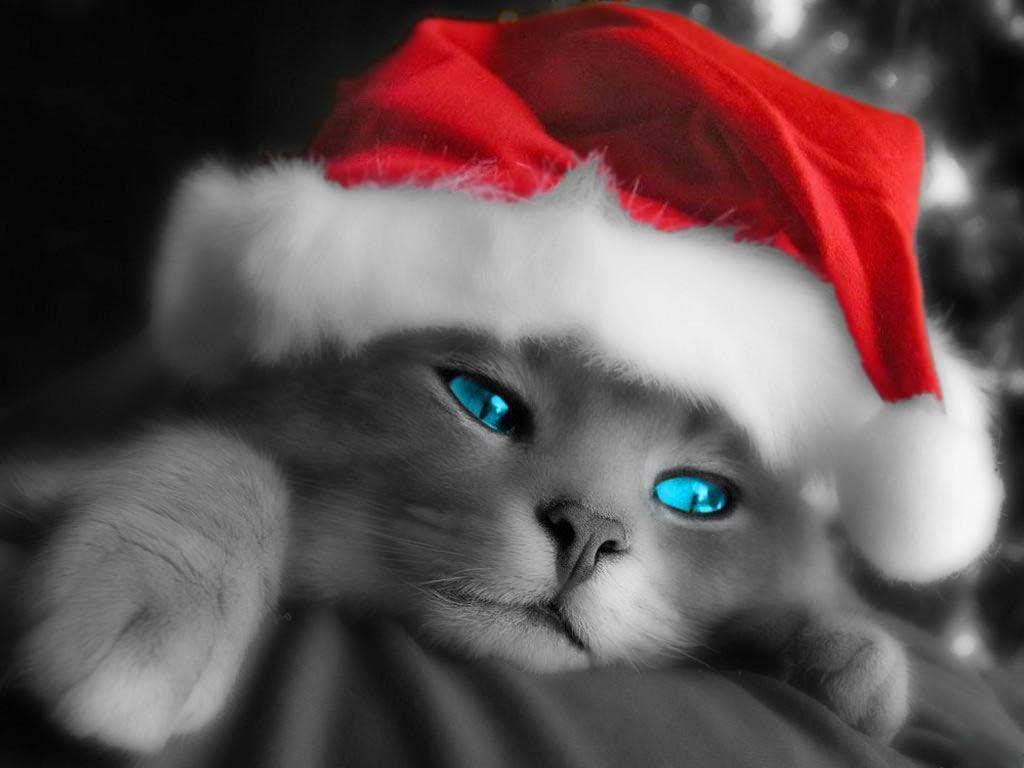 lustige weihnachts katzen kleine pause unterhaltung. Black Bedroom Furniture Sets. Home Design Ideas